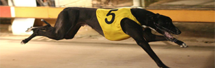 Lynleas King Winning The 2008 Warrnambool Classic
