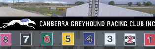 Bannerman Family Blitz Canberra Greyhound Meeting