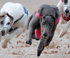 Sunday, 31 July 2016