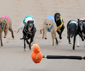 2017 Group 1 Silver Chief Classic – form, tips & best odds