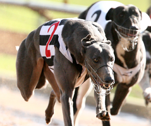 Australian Sprint & Maidment Memorial tips and betting preview