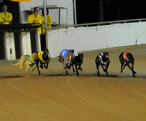 Greyhound racing's girls to step out in Ladies Bracelet heats