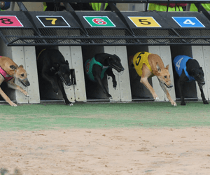 Australian Greyhound Racing 2011/2012 Group Calendar Released