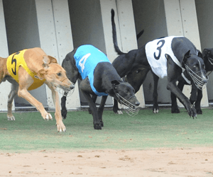 Back Page Takes Bundaberg's Open Class Race