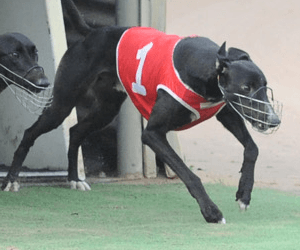 2016 Group 1 Vic Peters Classic tips and betting preview