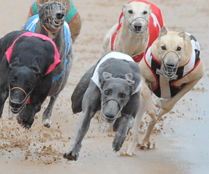 Wentworth Park free tips & best odds for Wednesday July 6, 2016