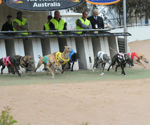 Top Field To Contest Devonport Maiden Final