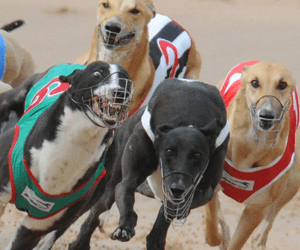 Lovelace and Acheron steal the show in Summer Cup heats