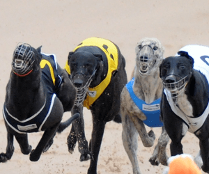 Greyhound Stalwart Lil Dickie Honoured At Ballarat Cup