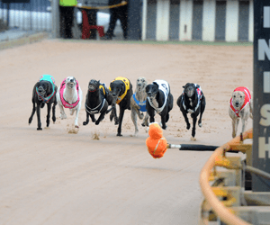 2016 Group 1 Hume Cup – free tips and complete betting preview