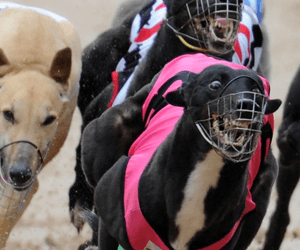 Group 1 Perth Cup and Galaxy final tips and betting preview