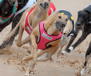 2016 Group 1 Melbourne Cup & Bold Trease heat tips and best odds