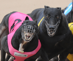 Temlee, Rookie Rebel & Zoom Top tips & betting preview