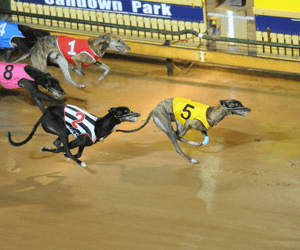 Group 1 National Futurity & National Derby – tips & free bets