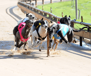 Seventeen Nominations Received For Victorian Heats Of National Distance Championships