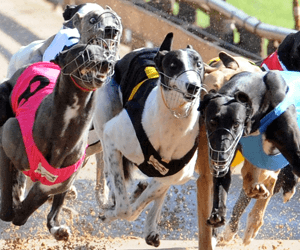 2016 Group 2 Shootout – free tips and complete betting preview