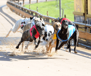 New Dawn For Ballarat Greyhound Racing