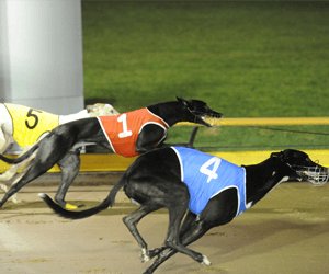 Group 2 Laurels Classic final – heat tips and betting preview