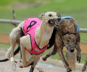 2016 Group 2 Richmond Riches – best tips and betting preview