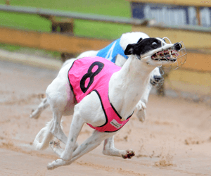 New Conductor Rail For Devonport Greyhounds