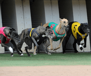 Fine Only For Andrea Dailly Carpfrofen Positive From The Meadows Greyhounds