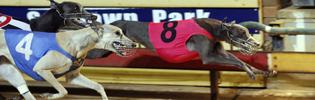 Gunnadoo Magic (8) winning at Sandown in late 2008