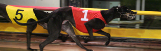 Nitro Burst Winning At The Meadows In August 2008