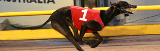Prankster Named AGRA December 2009 Greyhound Of The Month