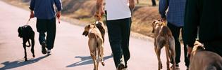 GAP's Prison Pet Partnership Program Wins Community Award