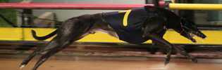 Trew Millions Is July's Greyhound Of The Month