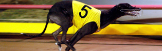 Velocette Stuns The 2009 Gold Coast Cup