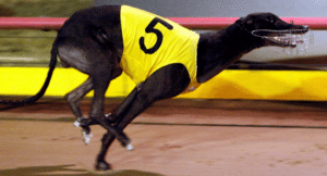 Greyhound bookmakers