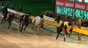 Thursday's top greyhound racing multi bet tips September 3, 2015