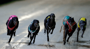 The Meadows greyhound tips and suggested bets April 25, 2015
