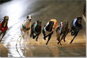 Group 3 greyhound racing