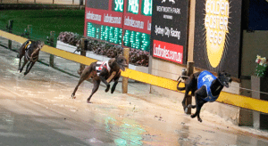 Friday's best greyhound racing tips for August 7, 2015