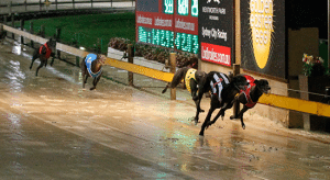 Friday's free greyhound racing parlay picks and top bookie odds