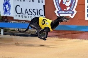 Marbo's Magic winning Maitland Gold Cup