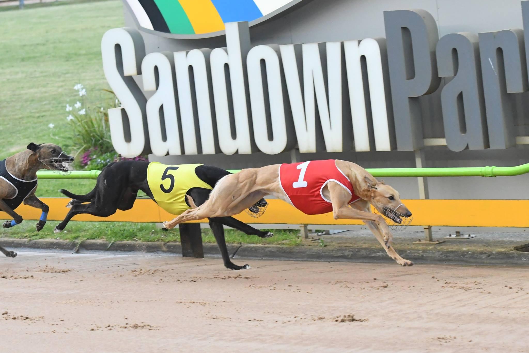 Greyhound speed dating