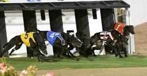Greyhound racing at The Meadows