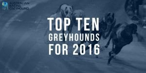 Top 10 greyhounds of 2016