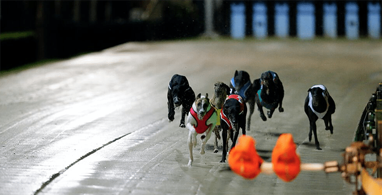 Top Rated U.S. Friendly Greyhound Betting Site