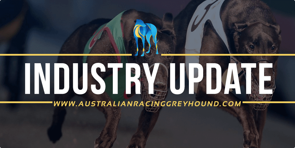 Australia Racing Greyhound