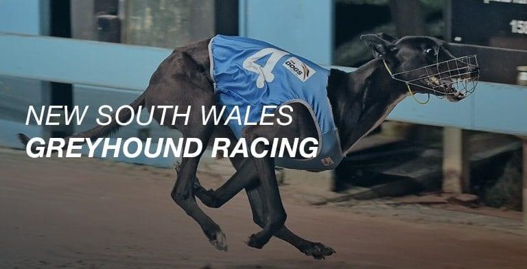 Nsw greyhound racing