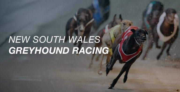 NSW greyhound racing
