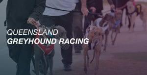 QLD greyhound racing
