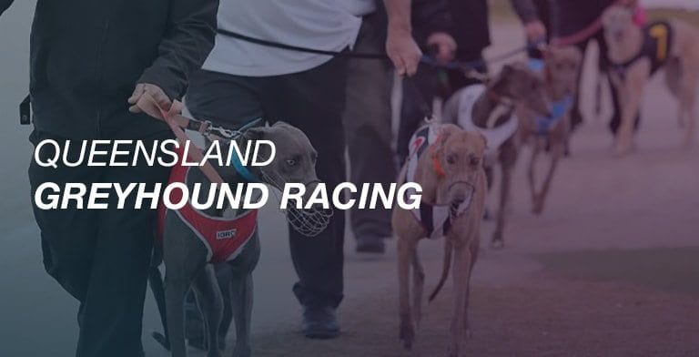 QLD greyhound racing