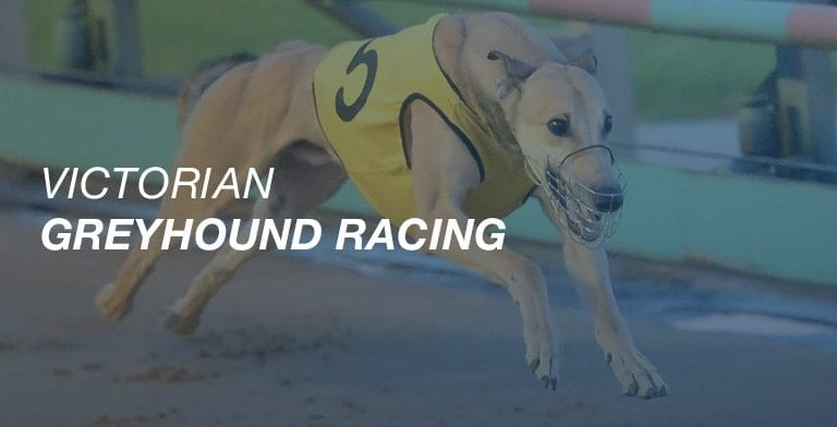 Victorian greyhound racing