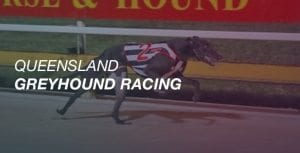 Queensland greyhound racing