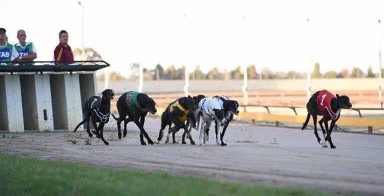 Shepparton Greyhounds